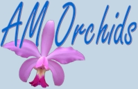 AM Orchids-Vandas, Asocendas, Orchid Species, Cattleyas, Dedrobiums